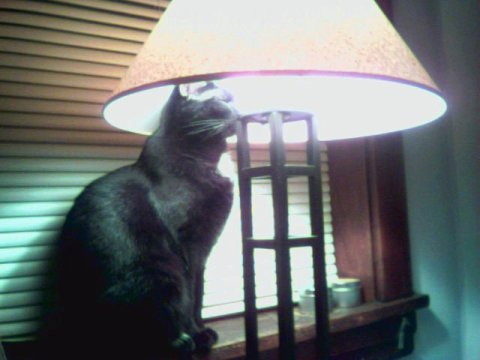 Ripley and the lamp